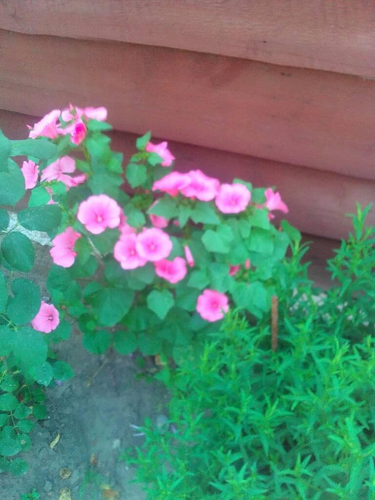 мої квіточки фотографія Юля