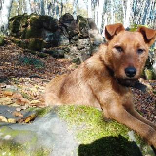 Фотография Лилия Егорова: собака на камнях
