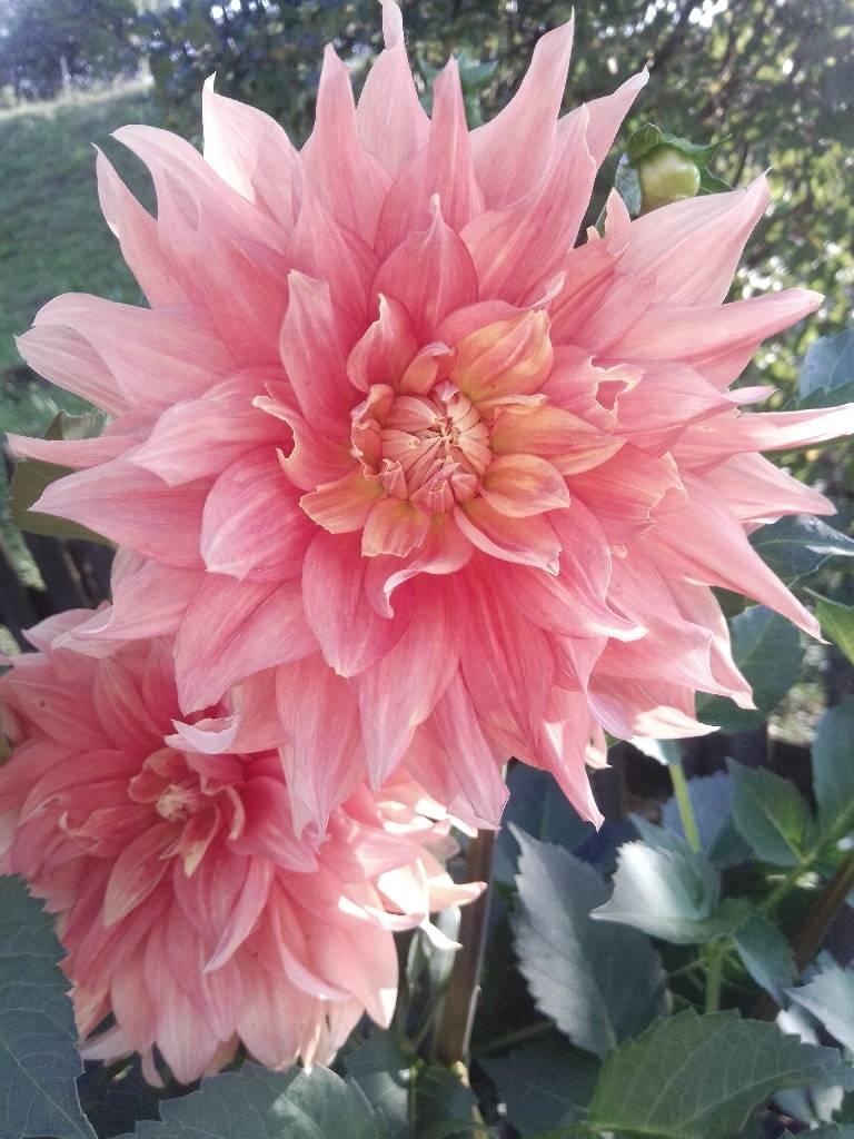квітка photo Yura