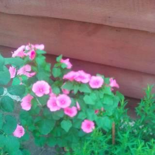 Photo Юля: мої квіточки