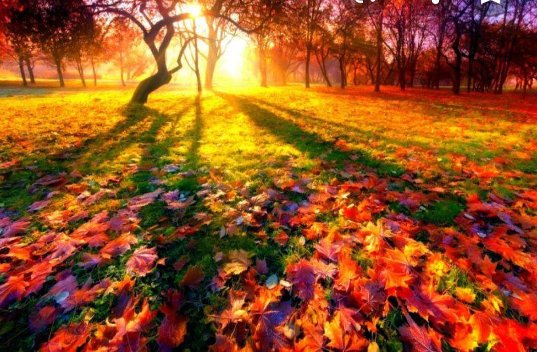 Хто любить осінь????????????? photo mashka