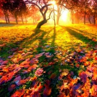 Photo mashka12345: Хто любить осінь?????????????