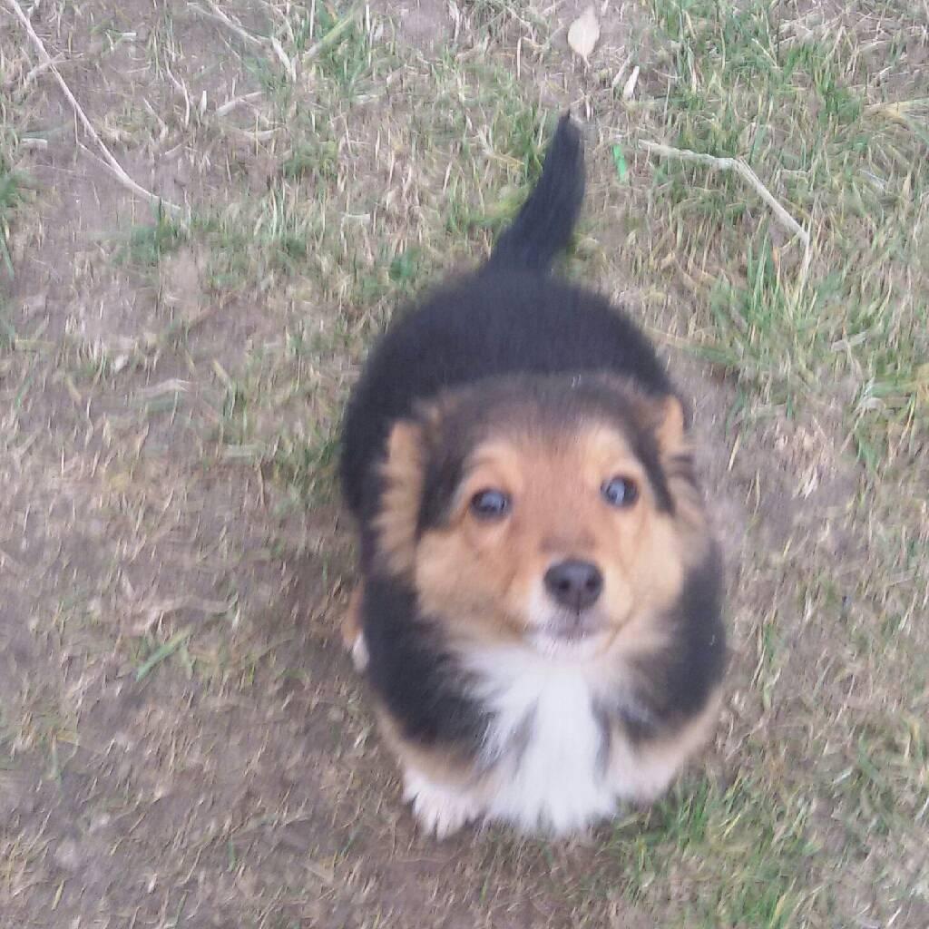 мой щенок photo Глеб