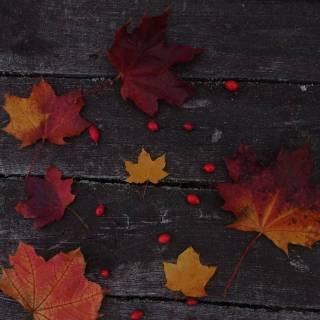 Фотография Nady: autumn 🍁
