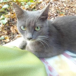 Фотография Лилия Егорова: кошка в лесу
