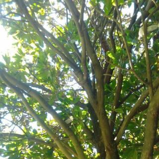 Фотография Лилия Егорова: рододендрон в Геленджике
