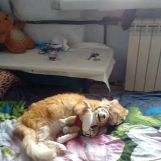 Фотография Александр Федров: вот так мой кот спит