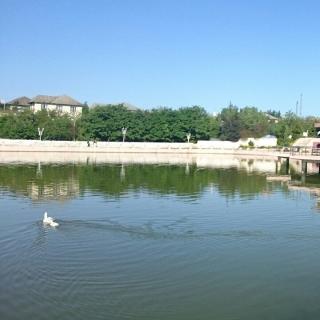 Фотография Эльнур: Park Cəlilabad