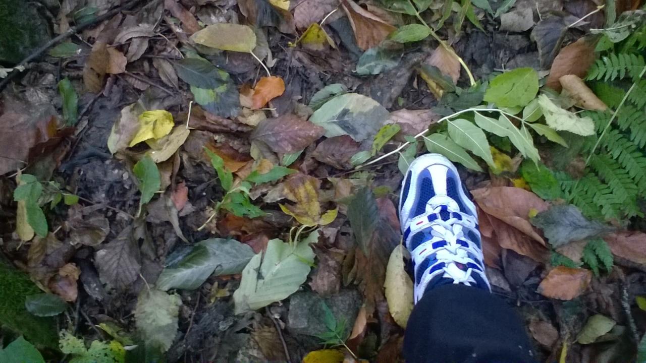 Прогулка по лесу)) фотография Хитрушка