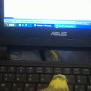 Фотография Хитрушка: Это Чика, мой попугайчик. Совсем молодая, очень любопытная и нахальная. Помогает мне работать на нетбуке))