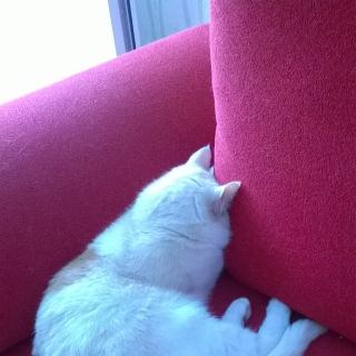 Фотография gyjty: Да,киса и так тоже спит.
