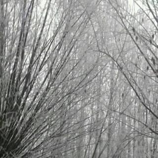 Фотография assalom: зима